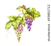 bunch of grapes. hand draw...   Shutterstock . vector #693801712
