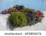 plastic green flowerbed with...