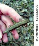 Small Lizard Sitting On Human...