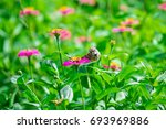 Sparrows On Flowers And Flower...