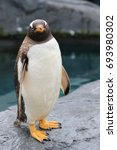 """Small photo of Cute penguin say """"Do you think my face always asks for trouble?"""""""