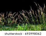 tall grass in the meadow... | Shutterstock . vector #693998062