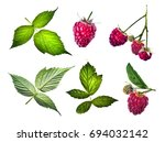 Raspberries Illustration....