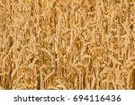 Sunlit Field Of Ripe Wheat....