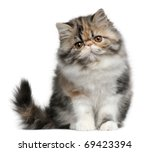 Stock photo persian cat months old sitting in front of white background 69423394