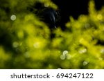 green leaves abstract with...   Shutterstock . vector #694247122