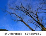 dried trees under blue sky at... | Shutterstock . vector #694309852