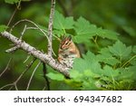 chipmunk on the tree with green ... | Shutterstock . vector #694347682