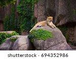 Beautiful Female Lioness...