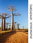 the baobabs alley  famous place ... | Shutterstock . vector #694392892