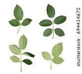 set of rose leaves. detailed... | Shutterstock . vector #694414672
