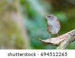 bird standing on branch in... | Shutterstock . vector #694512265