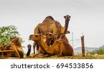 a herd of camels was relaxing... | Shutterstock . vector #694533856