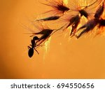 A Silhouette Of A Fire Ant...