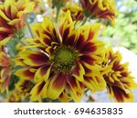 the flowers with their colors ...   Shutterstock . vector #694635835