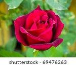 Longstemmed Red Rose On The...