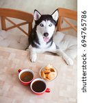dog and coffee | Shutterstock . vector #694765786