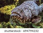 underwater marine wildlife...   Shutterstock . vector #694794232