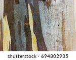 Close Up Eucalyptus Tree Bark...