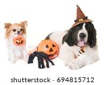 puppy landseer and chihuahua in ... | Shutterstock . vector #694815712