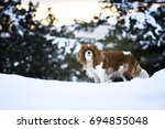 king charles spaniel in the snow | Shutterstock . vector #694855048