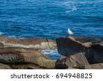 Solitary White Seagull Standing ...