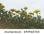 daisy under cloudy sky. low... | Shutterstock . vector #694960765