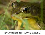 close up of a frog in the grass | Shutterstock . vector #694962652