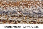 Small photo of Background acorn barnacles attached to hull of rowboat