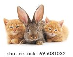 red kittens and bunny on a... | Shutterstock . vector #695081032