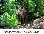 tapir  | Shutterstock . vector #695220835