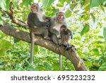 macaca cyclopis from taiwan to... | Shutterstock . vector #695223232