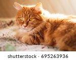 cute red cat relaxing in sun... | Shutterstock . vector #695263936