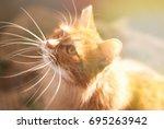 cute red cat relaxing in sun... | Shutterstock . vector #695263942