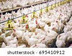 indoors chicken farm  chicken... | Shutterstock . vector #695410912