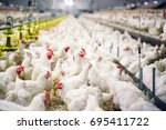 indoors chicken farm  chicken... | Shutterstock . vector #695411722