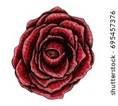 Dark Red Rose Hand Drawn ...