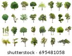 isolated tree on white... | Shutterstock . vector #695481058