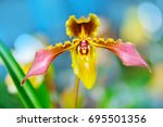 lady's slipper orchid.... | Shutterstock . vector #695501356