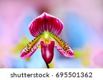 lady's slipper orchid.... | Shutterstock . vector #695501362