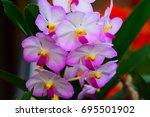 beautiful orchid  flowers  in... | Shutterstock . vector #695501902