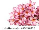 frangipani plumeria tropical... | Shutterstock . vector #695557852