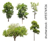 collection of isolated trees on ... | Shutterstock . vector #695576926