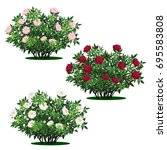 set of peony bushes with green... | Shutterstock .eps vector #695583808