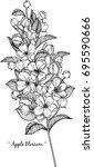 apple blossom illustration on... | Shutterstock .eps vector #695590666