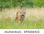tiger with yellow flowers.... | Shutterstock . vector #695606422