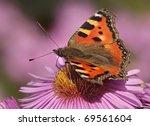 Butterfly Small Tortoiseshell...