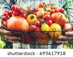 colorful organic tomatoes in... | Shutterstock . vector #695617918