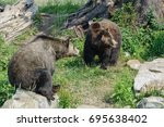 grizzly bears   Shutterstock . vector #695638402
