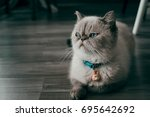 a cat looking to the side. | Shutterstock . vector #695642692
